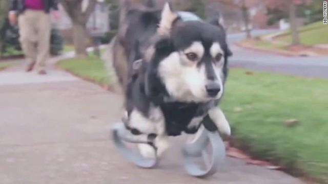 pkg moos 3d doggie legs_00000118.jpg