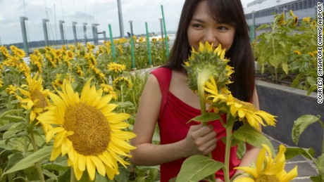 No joke. There's a sunflower garden in an airport.