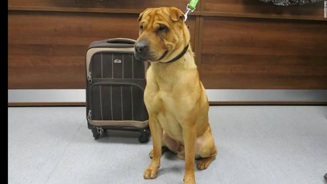 Abandonan un perro con una maleta en una estación de tren