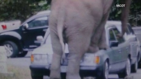 vo elephant crushes car thailand_00005810.jpg