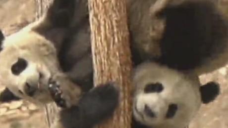 pkg stout panda virus_00002314.jpg