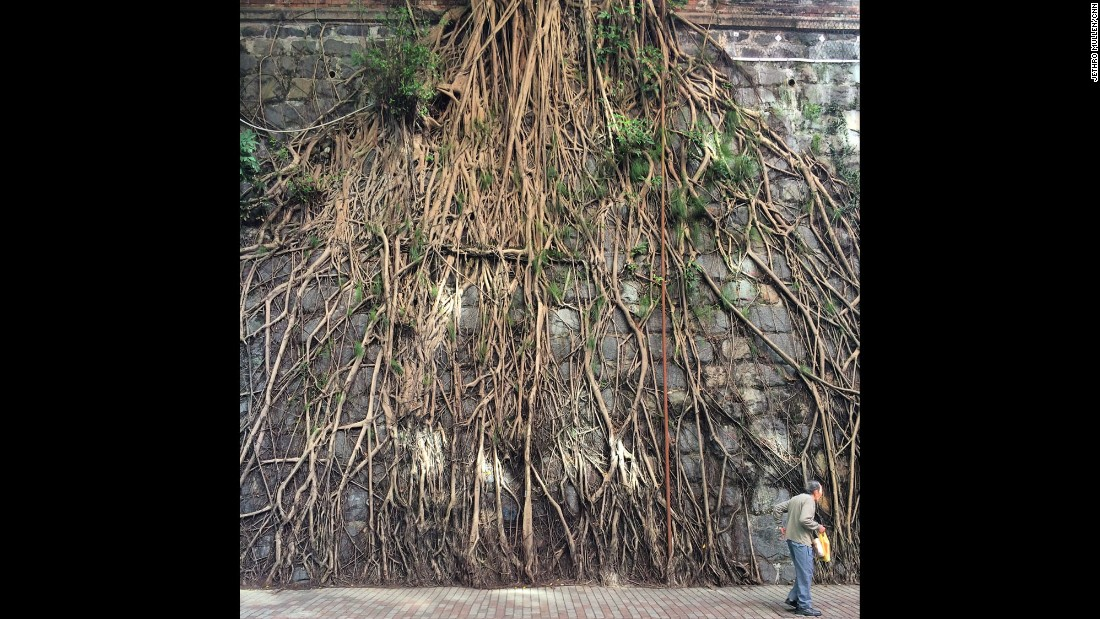 """HONG KONG: An old man passing the sprawling roots of a banyan tree on a wall in Kennedy Town neighborhood. Photo by CNN's Jethro Mullen.<br />Follow <a href=""""http://instagram.com/jethromullen"""" target=""""_blank"""">@jethromullen</a> and other CNNers on the <a href=""""http://instagram.com/cnnscenes"""" target=""""_blank"""">@cnnscenes</a> gallery on Instagram for more images you don't always see on news reports from our teams around the world."""