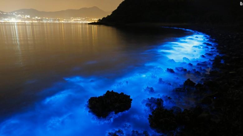 Un espectáculo de algas azules ilumina la costa de Hong Kong