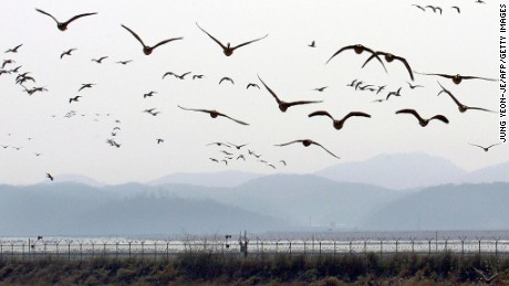 Home to five rivers and several mountains, the DMZ has become a thriving natural habitat for thousands of plant and animal species.