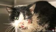 Un gato 'zombie' sale de su tumba y vuelve a casa