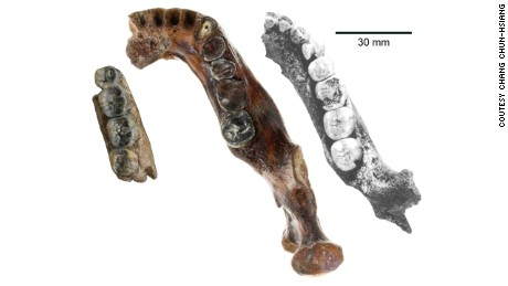The new jawbone (center) is thicker than those of other ancient human fossils found in Java (left) and Peking (right).