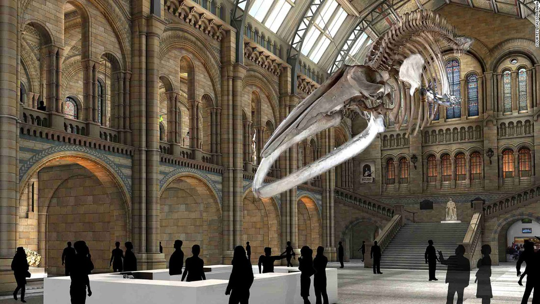 Foyer Museum Jobs : Blue whale puts dippy diplodocus out of a job cnn