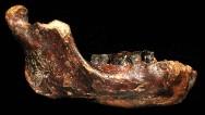 Fósil puede revelar un nuevo tipo de humano
