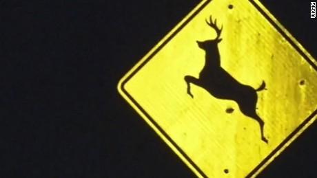 dnt fl four men four deer one mini cooper_00003515.jpg