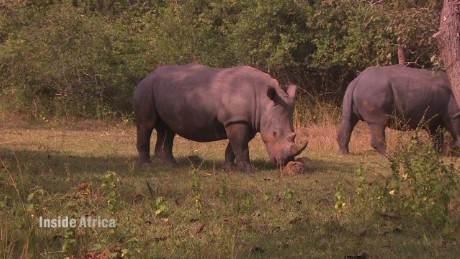 spc inside africa uganda rhinos c_00043404.jpg