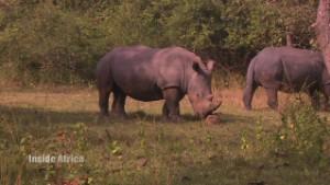 Protecting Uganda's precious rhinos