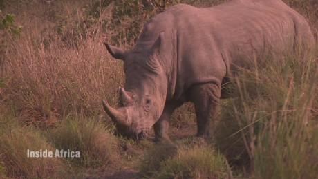 spc inside africa uganda rhinos a_00054914.jpg