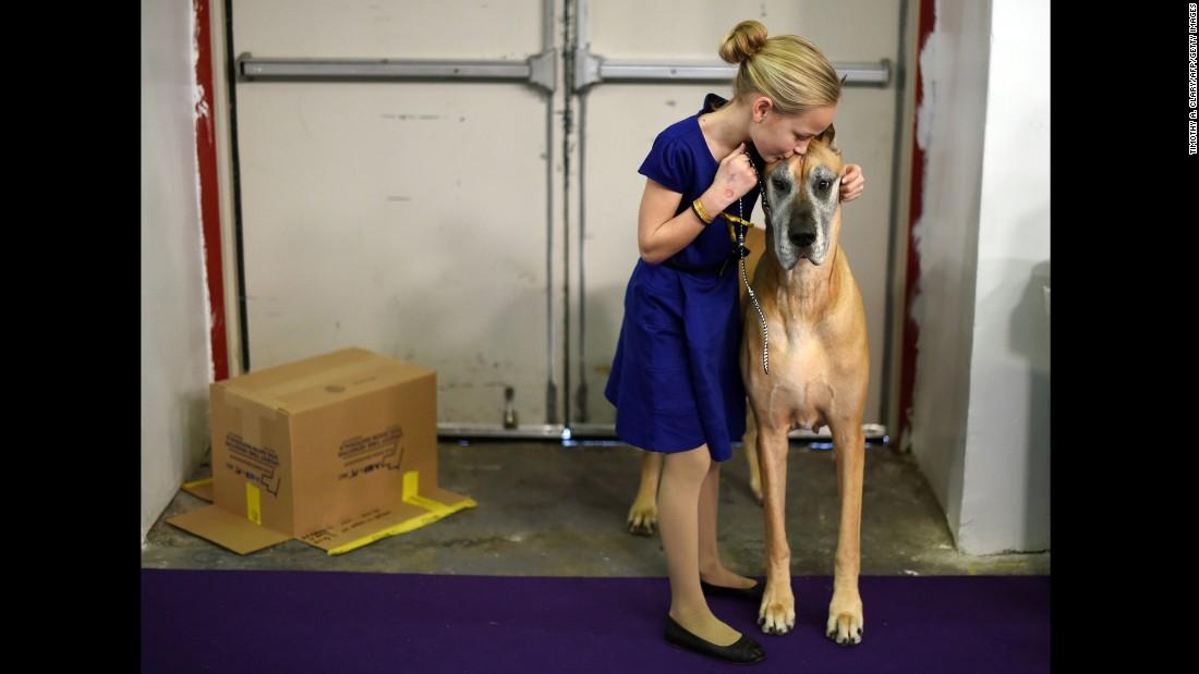Emma Rogers, 11, kisses a Great Dane named Joy on February 17.