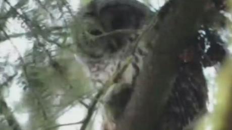 ac sot ridiculist owl attacks_00003217.jpg