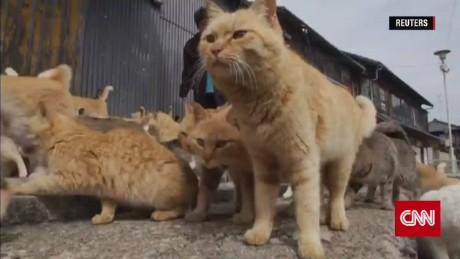 japan cat island_00001806