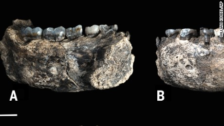 This image provided by William Kimbel shows different views of the LD 350-1 mandible. The scale bars indicate 1 cm. The jawbone fragment is the oldest known fossil from an evolutionary tree branch that eventually led to modern humans, scientists reported on Wednesday, March 4, 2015. At about 2.8 million years old, the partial jawbone pushes back the fossil record by at least 400,000 years for our branch, which scientists call Homo. (AP Photo/William Kimbel)