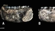 Hallan la mandíbula del humano más antiguo