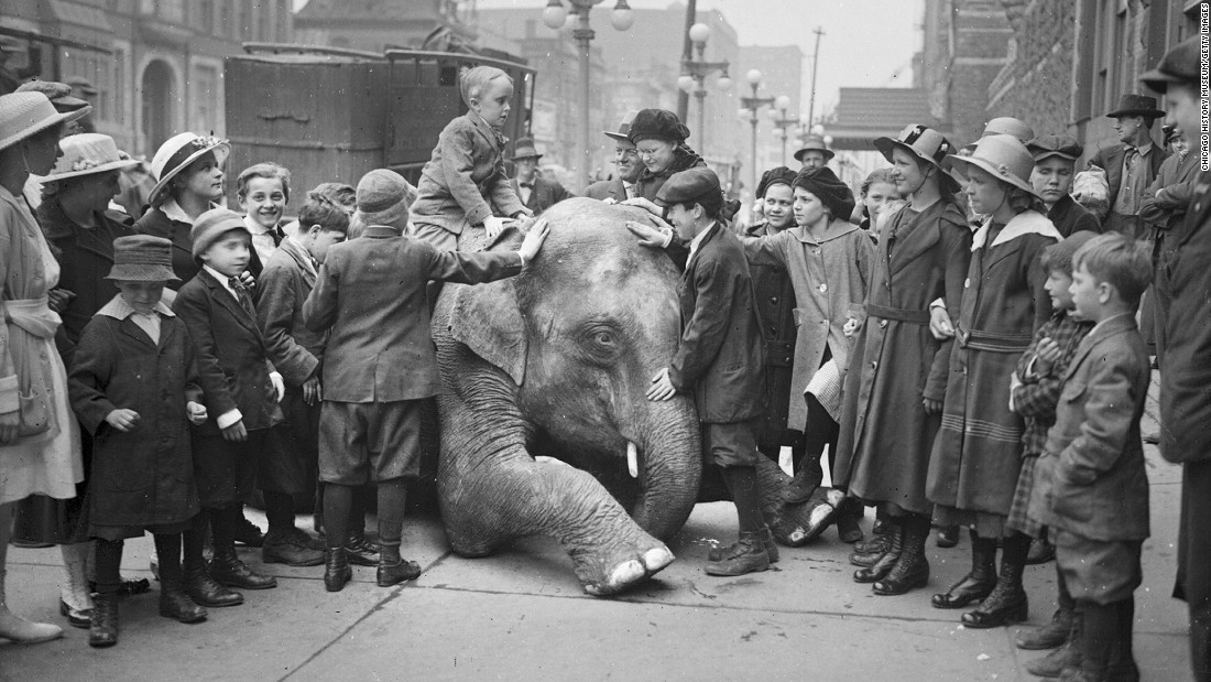 Elephants in Ringling Bros. circus...