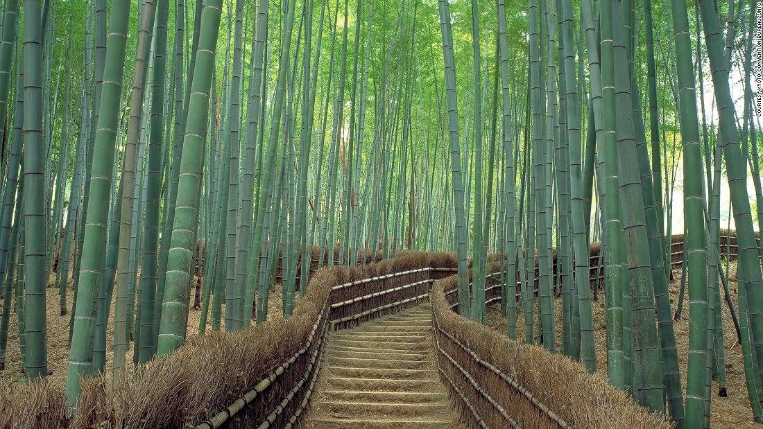 "Considered one of the world's most beautiful forests, it's not just tranquil visually but also aurally. <br />The bamboo grove is beloved for its distinct rustling sound, so much that Japan's Ministry of Environment included the <a href=""http://edition.cnn.com/2014/08/11/travel/sagano-bamboo-forest/"">Sagano Bamboo Forest</a> on its list of ""100 Soundscapes of Japan."" <br />The towering green stalks creak eerily while leaves rustle in the sway of the wind.<em><br />Sagano Bamboo Forest, Arashiyama, Kyoto, Japan</em>"