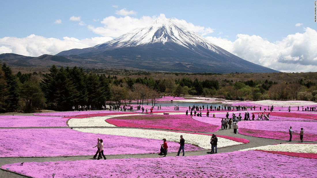 "With Mount Fuji in the background, some 800,000 stalks of shibazakura or ""moss phlox"" cover 2.4 hectares of land in a carpet of pink, white and purple. Thousands travel to the Fuji Five Lakes area for the festival celebrating the flower's first bloom, which runs April 18 to May 31 this year.<em><a href=""http://www.shibazakura.jp/eng/"" target=""_blank""><br />Fuji Shibazakura Festival<em></em></a>, 212 Motusu, Fujikawaguchiko, Yamanashi</em><em>, Japan</em><em>; +81 555 89 3031</em>"