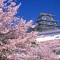 beautiful japan Himeji Castle