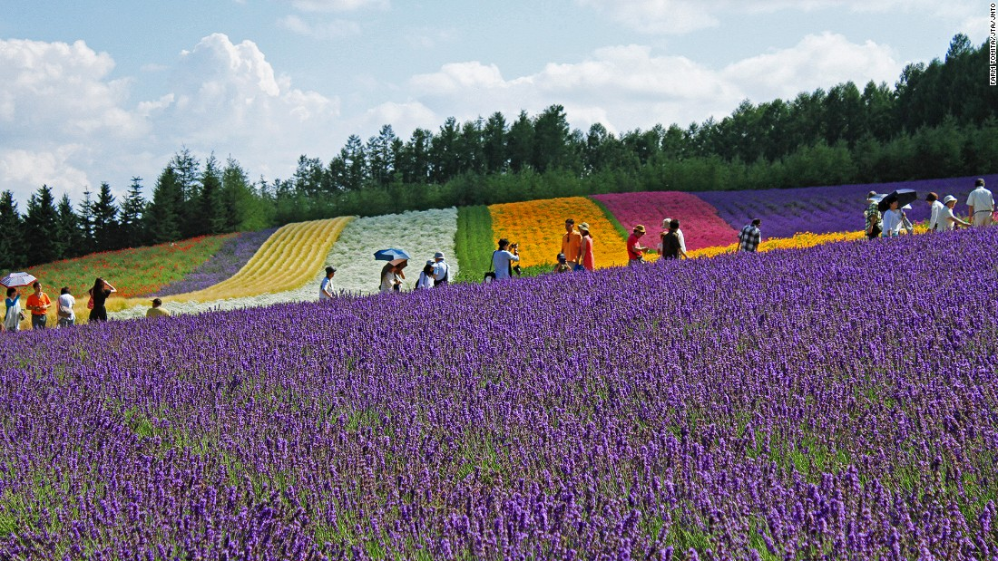 "Farm Tomita has three lavender fields: Lavender East, Sakiwai Field and the Traditional Lavender Garden. <br />Sakiwai Field, meaning ""happiness field,"" has four types of lavender growing in rows, creating a gradient of purple with the rainbow colors of Autumn Field, Spring Field and Hanabito Field as background. <br />Still not enough lavender? Try the farm's lavender ice cream.<em><br /><a href=""http://www.farm-tomita.co.jp/"" target=""_blank"">Farm Tomita</em></a><em>, 15 Nakafurano Kisen Kita, Nakafurano, Sorachi, Hokkaido, Japan; +81 167 39 3939</em>"