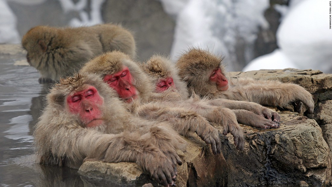 "The steaming springs set in a snowy mountain may be scenic, but travelers come here to see something else -- the hot spring monkeys.<br />Some 200 Japanese macaque monkeys live in Jigokudani -- which translates to ""hell valley"" -- where the rough cliffs and onsens are covered in snow for a third of the year. <br />The monkeys bathe at the main onsen of the park in winter without a care for observers. <br />Anyone jealous of the monkey's lazy ways can head over to Korakukan Ryokan for their own thermal soak.<em><br /><a href=""http://www.jigokudani-yaenkoen.co.jp/english/html/top_e.htm"" target=""_blank"">Snow Monkey Park</em></a><em>, 6845 Yamanouchi, Nagano, Japan; +81 269 33 4379</em>"
