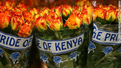 AMSTERDAM, NETHERLANDS - FEBRUARY 08: Roses from Kenya wait to be auctioned at Aalsmeer Flower auction in the run up to Valentines Day on 8 February, 2007, Aalsmeer, Netherlands. Aalsmeer Flower Auction is the largest of it's kind in the world housed in the world's largest commercial building. In the run up to Valentines day top quality roses were selling for 3 Euros each with traders selling over 50 million roses and over 22 million cut flowers and plants. The most special order was 150,000 roses for a lady in Dubai. (Photo by Christopher Furlong/Getty Images)