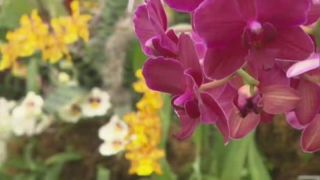 cnnee pkg vega new york orchids show_00003222
