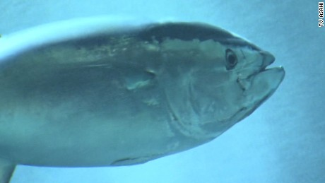 orig tokyo aquarium tuna fish deaths_00001506.jpg