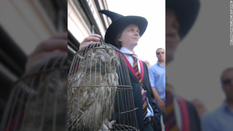 PETA critica presuntos maltratos a búhos de Harry Potter