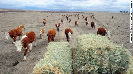 Hay is delivered to feed a herd of cattle at Nathan Carver's ranch. Carver's family has worked the land for five generations outside Delano, in California's Central Valley. The worst drought in decades reduced the spread to a moonscape.