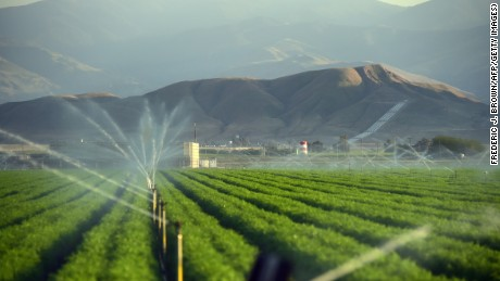Fields of carrots are watered in late March 2015 in Kern County, California, which became the nation's No. 2 crop county for the first time in 2013.
