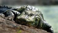 Madre salva a su hija del ataque de un cocodrilo
