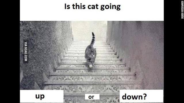 Nuevo debate en Twitter: ¿el gato sube o baja las escaleras?