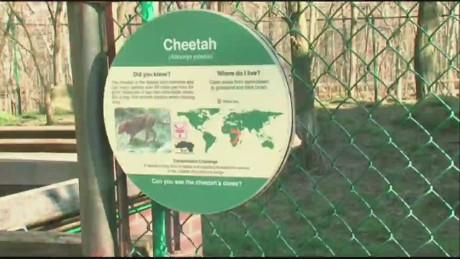 bts oh child falls into cleveland zoo cheetah exhibit_00005724