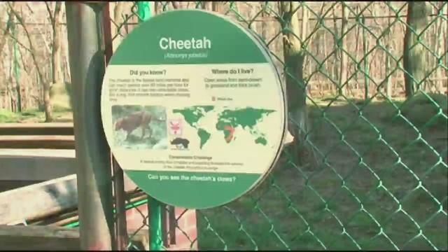 Unos padres podrían ser imputados después de que su hijo cayera al foso de los guepardos en un zoo