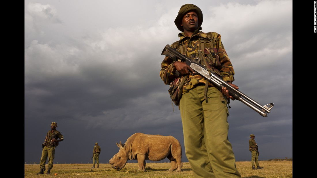 In Kenya, where three of the four remaining northern white rhinos live, armed guards prevent poaching.
