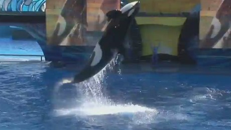 ctn pkg savidge seaworld future_00013121