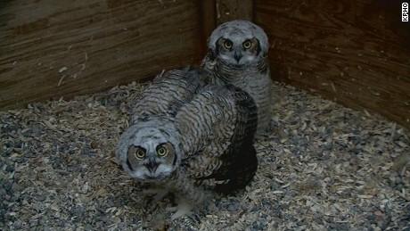 Owl rescue sets off backlash online