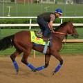 American pharaoh horse 0428