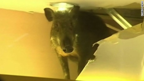 ct hong kong wild boar shopping mall_00002207