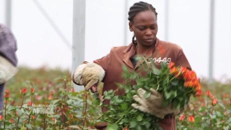 spc marketplace africa kenya flower industry b_00023606.jpg