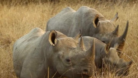 intv flocken black rhino hunt controversy_00023017.jpg