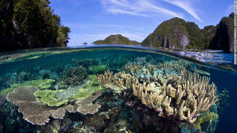 Raja Ampat: Home to 75% of all known coral species.