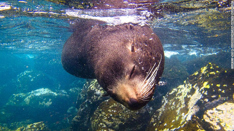 A friendly sea lion might pop over to say hello during your Galapagos snorkel.
