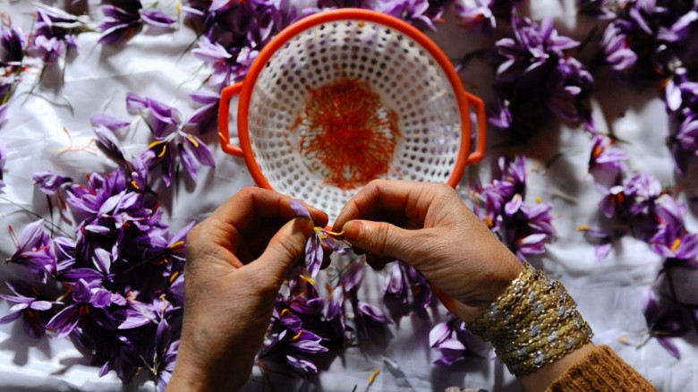 Picking saffron in Afghanistan, where the industry is growing rapidly.