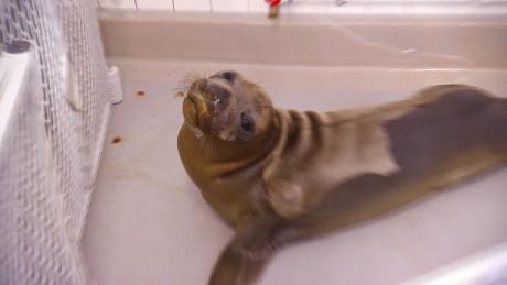 California oil spill SeaWorld orig_00000121.jpg