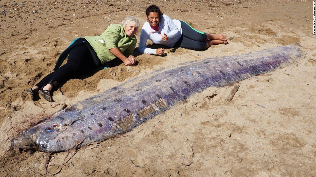 An oarfish washed ashore this week on Catalina Island, which sits off ... Oarfish 56 Ft