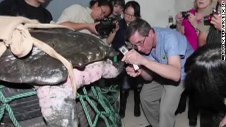 China Yangtze turtle extinction ORIG_00004323